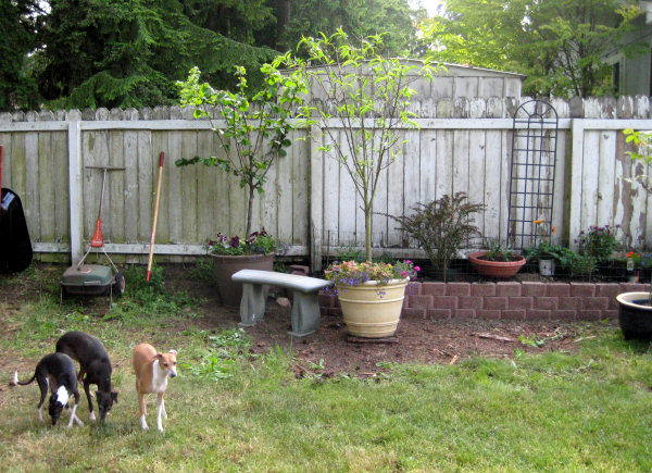 Raised Garden Beds Against Fence : Raised Flower Beds Against Fence